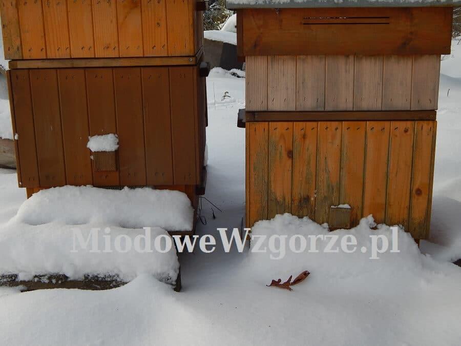 śnieżny styczeń w pasiece