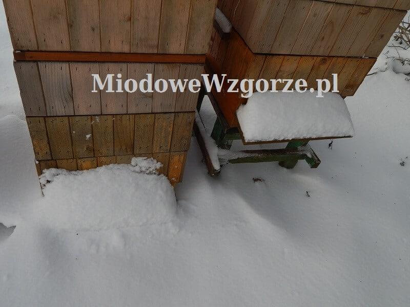 Wylotki w ulach zasypane śniegiem