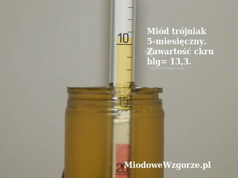 poziom cukru BLG 13