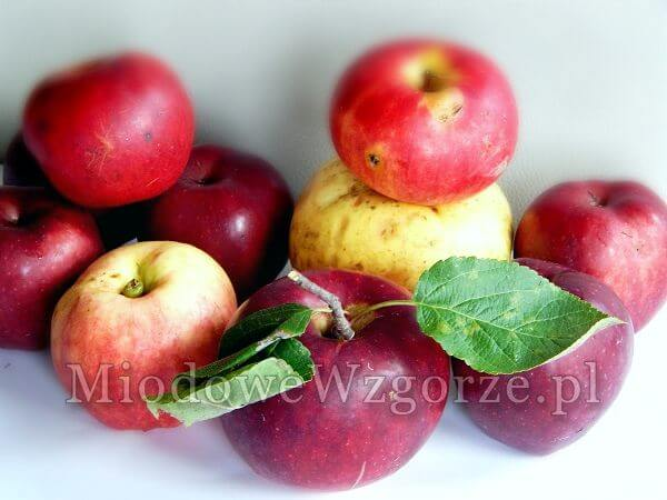 na zdjęciu ekologiczne jabłka z sadu